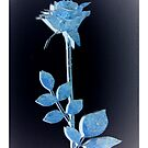 Blue Rose by ©The Creative  Minds