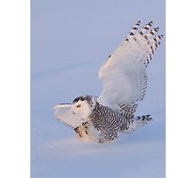 Touchdown - Snowy Owl Photographic Print