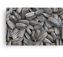 sunflower seeds  macro Canvas Print