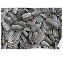 sunflower seeds  macro Poster
