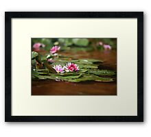waterlily red lotus Framed Print