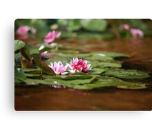 waterlily red lotus Canvas Print