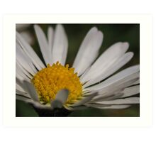 Macro / Close up of a daisy / flower potography flaura Art Print