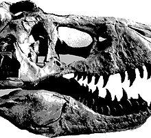 T-Rex Halfdot Skull by Meredith Bertschin