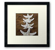 Starfish #2 Framed Print