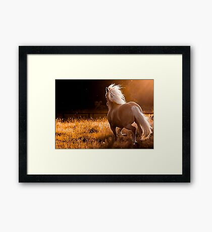 Horse wallpaper Framed Print