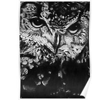 Owl drawing photorealistic Poster