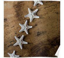 Starfish #10 Poster