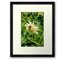 Flower and a Bee Framed Print