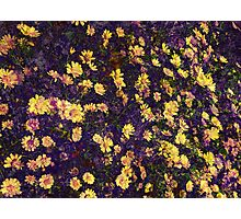 Cool, unique modern nature daisy floral pattern art design Photographic Print