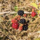 3142016 blackberries by pcfyi