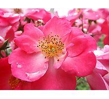 NY June Flower Close-Up, Liberty Community Garden, Lower Manhattan, New York City Photographic Print