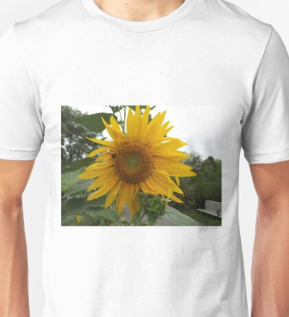 NY August Sunflower Close-Up, Liberty State Park, New Jersey T-Shirt