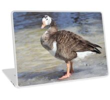Hybrid Canadian Snow Goose. Laptop Skin