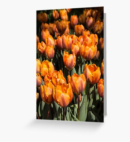 Tulips, Tulips, Tulips! Greeting Card