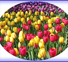 Glorious Array - Keukenhof Tulips Vignette by BlueMoonRose