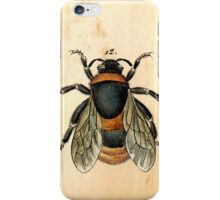 Vintage bee illustration iPhone Case/Skin