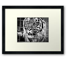 Eye of the Tiger Framed Print