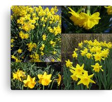 A Collage of Golden Daffodils Canvas Print