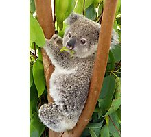 Hope, Orphan Koala Photographic Print