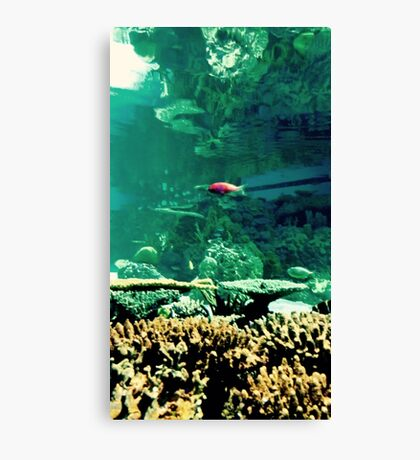 Little Fish in a Big Blue World Canvas Print