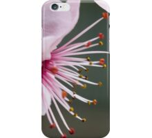 pink flowers on tree iPhone Case/Skin