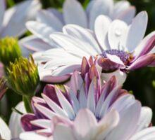 daisy in the garden Sticker