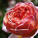 Pink Rose Profile by Joy Watson