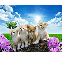 Four Kittens Photographic Print