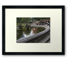Cooling Off in Bethesda Fountain Framed Print