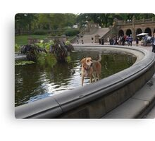 Cooling Off in Bethesda Fountain Canvas Print