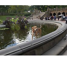 Cooling Off in Bethesda Fountain Photographic Print