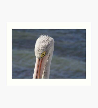 Pelican Sleeping Art Print
