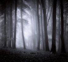 Misty Woodland by Ian Hufton