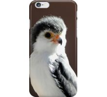 African Pygmy Falcon iPhone Case/Skin