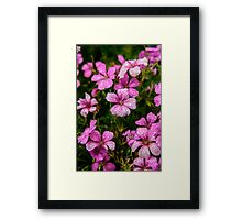 Flower After The Rain Framed Print