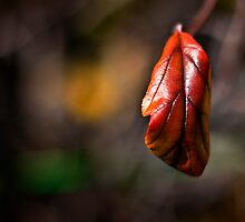 Lonely leaf.  by DaveBassett
