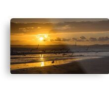 Dog chasing seagulls on the beach in the sunset Metal Print