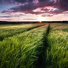 Barley fields at Sunset by Ian Hufton