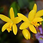 Tiny Yellow Orchids by Kathleen Brant