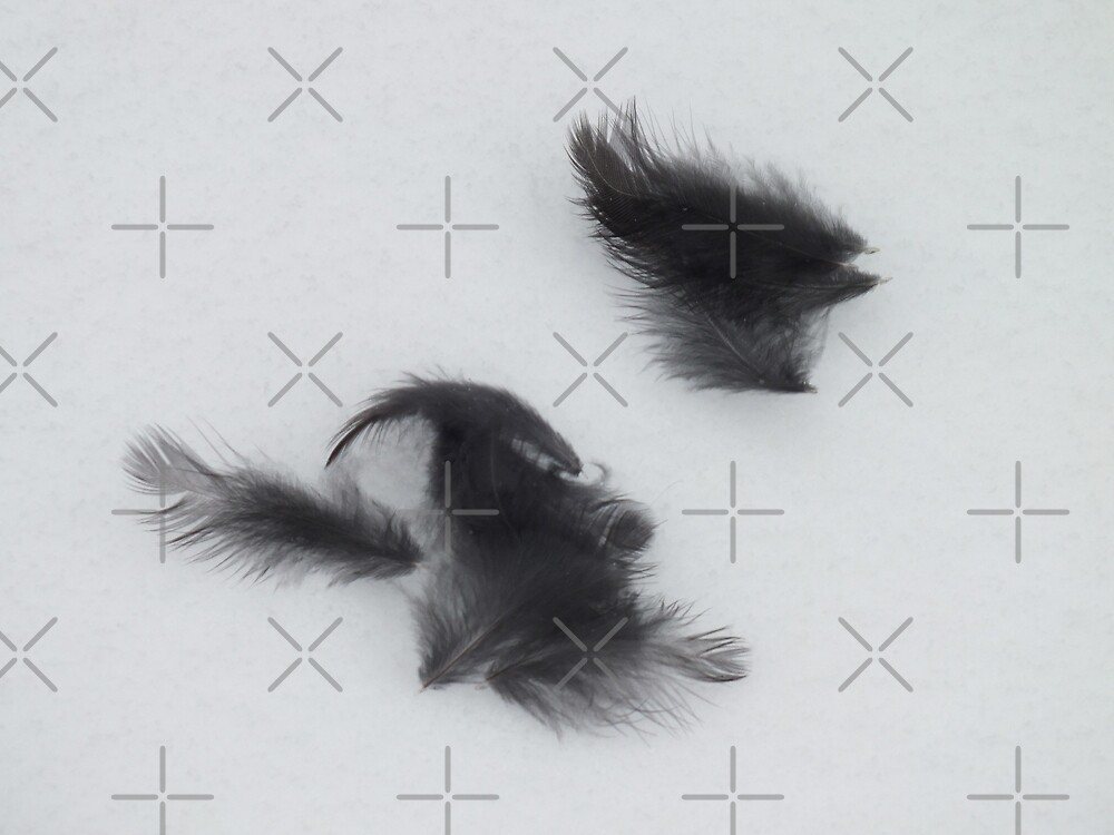 Black Feathers on Snow by Yampimon