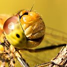 Smiling Dragonfly Portrait by Ian Hufton