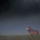Red Deer Stag by Ian Hufton