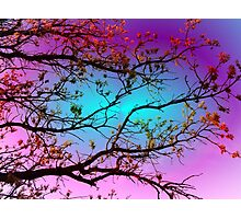 Spring Branches - Softly Illuminated Photographic Print