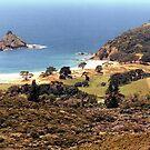 Harataonga ............Gt. Barrier Island, New Zealand.  ! by Roy  Massicks