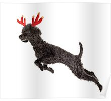 Black Poodle Christmas Reindeer with Red Antlers Poster