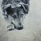 Luna Portrait by Priska Wettstein