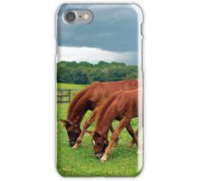 Thoroughbred Foals iPhone Case/Skin