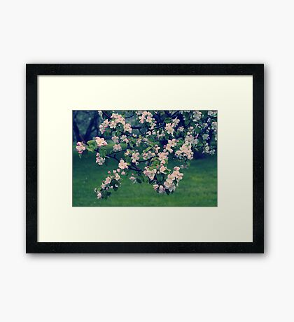 Blossoming Spring Garden Framed Print