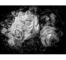 Roses in Black & White Photographic Print